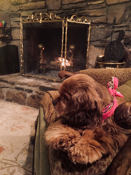 Fireside with Lady Coco
