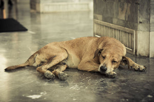 How to deal with the death of a cherished pet