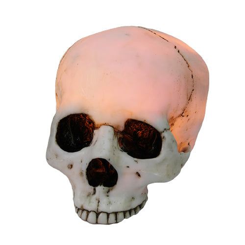 7 Inch Night Glowing Skeleton Skull Resin Statue Figurine