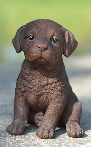 Chocolate Brown Labrador Puppy Glass Eyes Statue Adorable