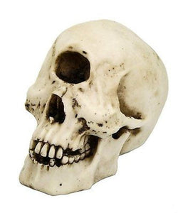 Cyclops Skull Collectible Figurine Desktop Home Decor