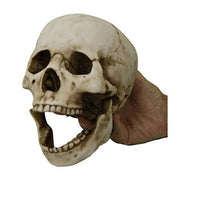 Homo Sapiens Skull with Movable Jaw Collectible Desktop Figurine Gift 6 Inch