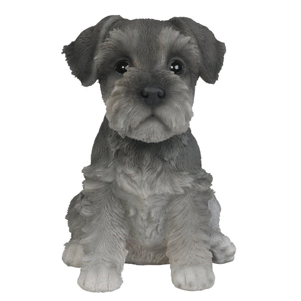 Adorable Seated Mini Schnauzer Puppy Collectible
