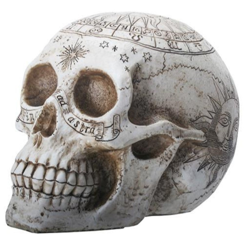 YTC 7.75 Inch Resin Skull with Astrology Engravings, White Colored