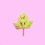 Parsley Herb Enamel Pin