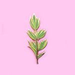 Rosemary Herb Enamel Pin