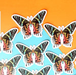 Sunset Moth Clear Vinyl Sticker