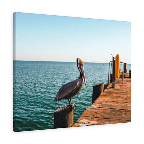 Santa Barbara Pelican Premium Wall Canvas