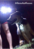 dog walking light