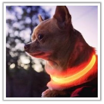 light up dog collar for nighttime walking safety