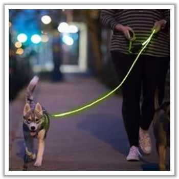 light up dog leash for safety during night walking