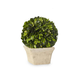 "Individual Product - POTTED TOPIARY ACCENT 10""H"
