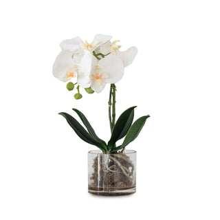 Individual Product - SINGLE WHITE ORCHID IN GLASS VASE 14""