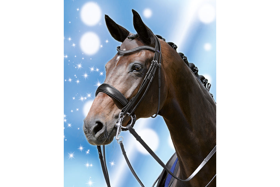 Passier Blu Dream Double Bridle SALE