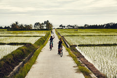 bali photography rice fields indonesia