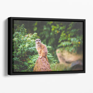 A Meerkats full attention Floating Framed Canvas - Canvas Art Rocks - 1
