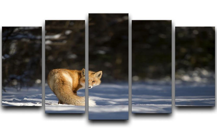 A Red Fox turns back to look at the camera 5 Split Panel Canvas