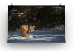 A Red Fox turns back to look at the camera Canvas Print or Poster - Canvas Art Rocks - 2