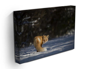 A Red Fox turns back to look at the camera Canvas Print or Poster - Canvas Art Rocks - 3