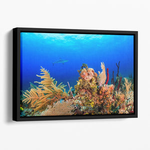 A Reef shark swimming on a tropical coral reef Floating Framed Canvas - Canvas Art Rocks - 1