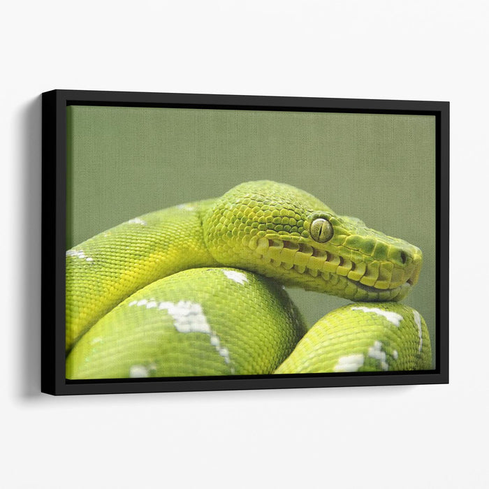 A closeup landscape shot of an Emerald Tree Boa Floating Framed Canvas