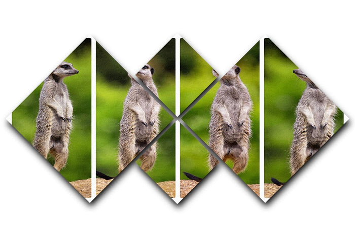 A collage of meerkats 4 Square Multi Panel Canvas