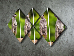 A collage of meerkats 4 Square Multi Panel Canvas - Canvas Art Rocks - 2