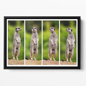 A collage of meerkats Floating Framed Canvas - Canvas Art Rocks - 2