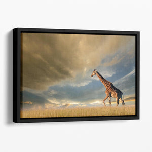 A giraffe walking on the African plains against a dramatic sky Floating Framed Canvas - Canvas Art Rocks - 1