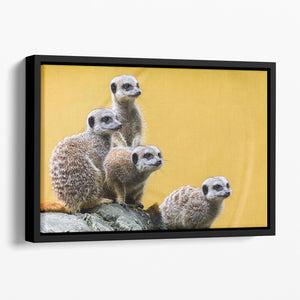 A group of meerkats seen on top of a rock Floating Framed Canvas - Canvas Art Rocks - 1