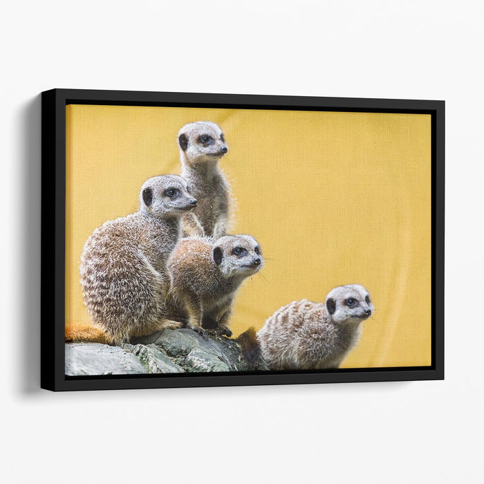 A group of meerkats seen on top of a rock Floating Framed Canvas