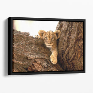 A little tiger cub look out for rocks Floating Framed Canvas - Canvas Art Rocks - 1