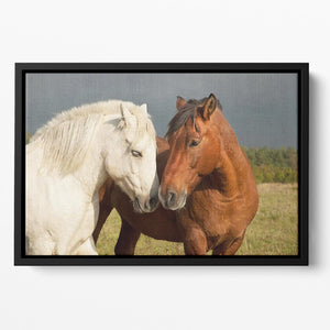 A pair of horses showing affection Floating Framed Canvas - Canvas Art Rocks - 2