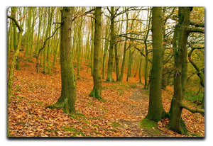 A path through the woods at Haw park Canvas Print or Poster  - Canvas Art Rocks - 1