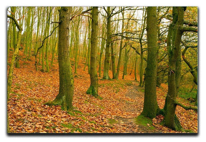 A path through the woods at Haw park Canvas Print or Poster