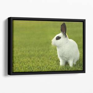 Adorable White Bunny Rabbit Floating Framed Canvas - Canvas Art Rocks - 1