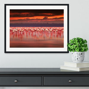 African flamingos in the lake Framed Print - Canvas Art Rocks - 1