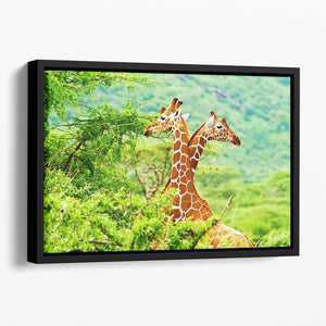 African giraffes family Floating Framed Canvas - Canvas Art Rocks - 1
