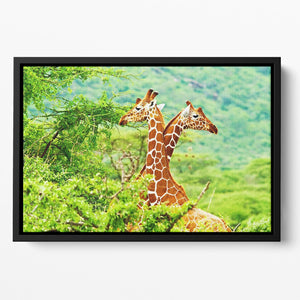 African giraffes family Floating Framed Canvas - Canvas Art Rocks - 2