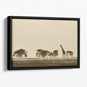 African landscape with giraffe in black and white Floating Framed Canvas - Canvas Art Rocks - 1