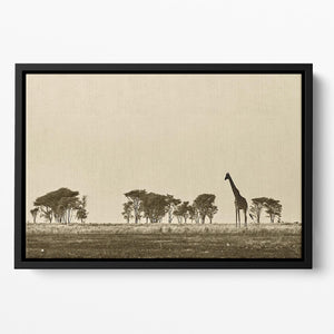 African landscape with giraffe in black and white Floating Framed Canvas - Canvas Art Rocks - 2