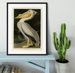 American White Pelican by Audubon Framed Print - Canvas Art Rocks - 1