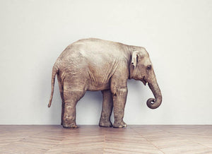 An elephant calm in the room near white wall. Creative concept Wall Mural Wallpaper - Canvas Art Rocks - 1