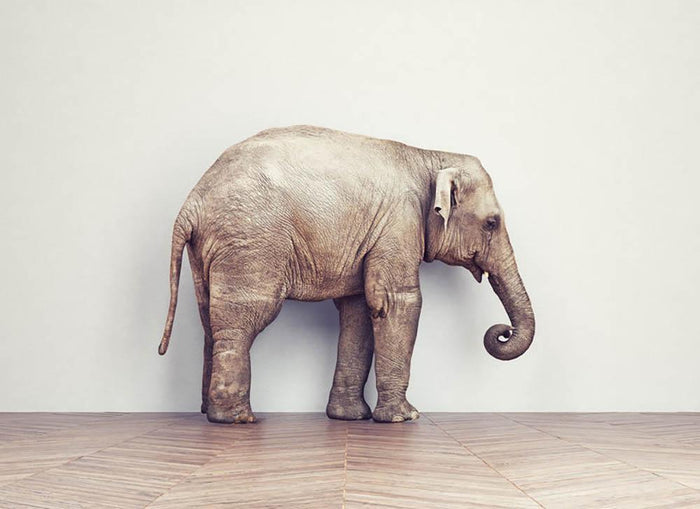 An elephant calm in the room near white wall. Creative concept Wall Mural Wallpaper
