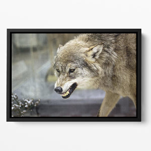 Angry grey wolf in winter forest Floating Framed Canvas - Canvas Art Rocks - 2