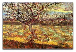 Apricot Trees in Blossom by Van Gogh Canvas Print & Poster  - Canvas Art Rocks - 1