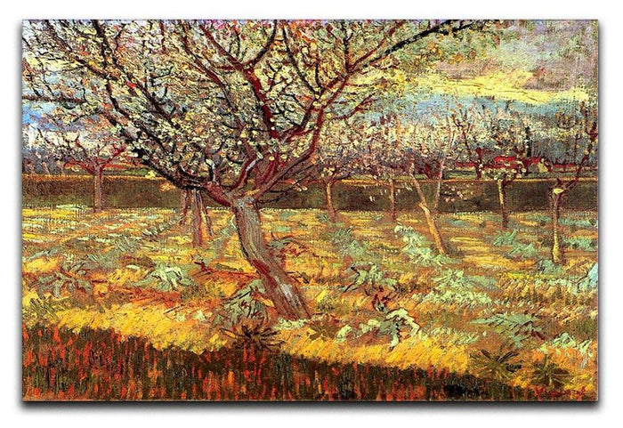 Apricot Trees in Blossom by Van Gogh Canvas Print or Poster