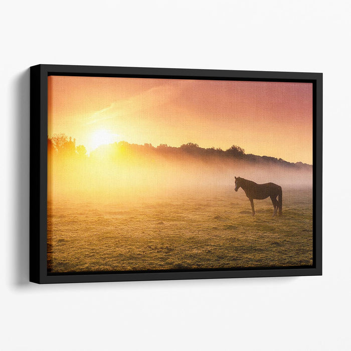 Arabian horses grazing on pasture at sundown in orange sunny beams. Dramatic foggy scene Floating Framed Canvas