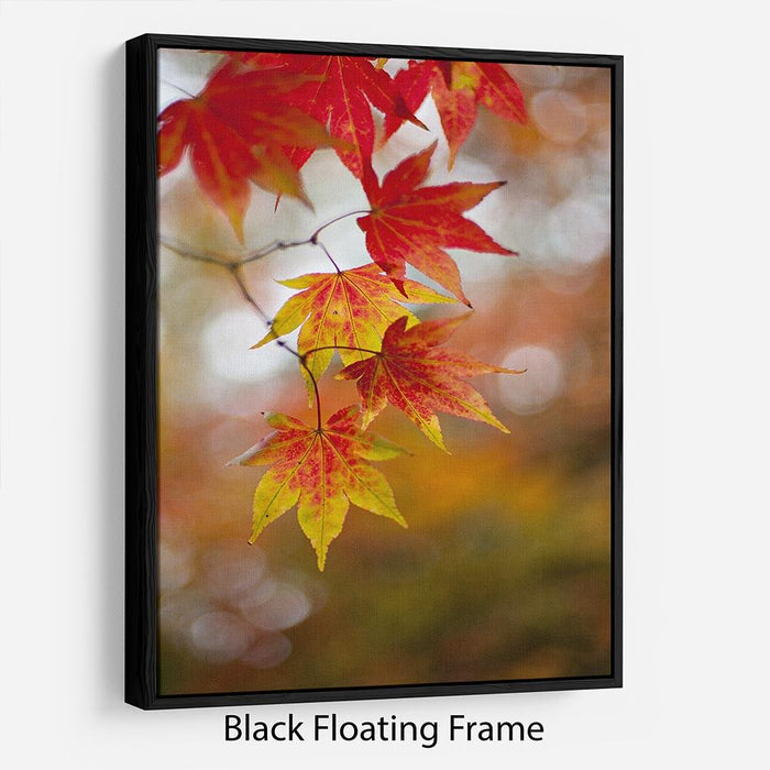 Autumn Colours Floating Frame Canvas