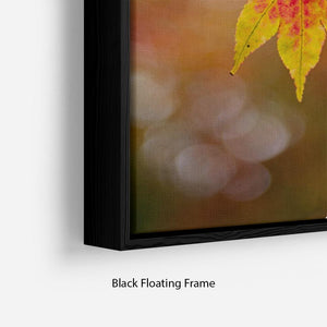 Autumn Colours Floating Frame Canvas - Canvas Art Rocks - 2